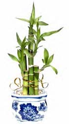 How to Grow Bamboo Plants Indoors or Out, Gardener's Network