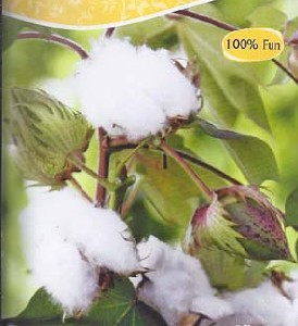 Cotton, Plant, Jpeg, Image, Pictures